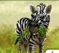 My Free Zoo Zebra